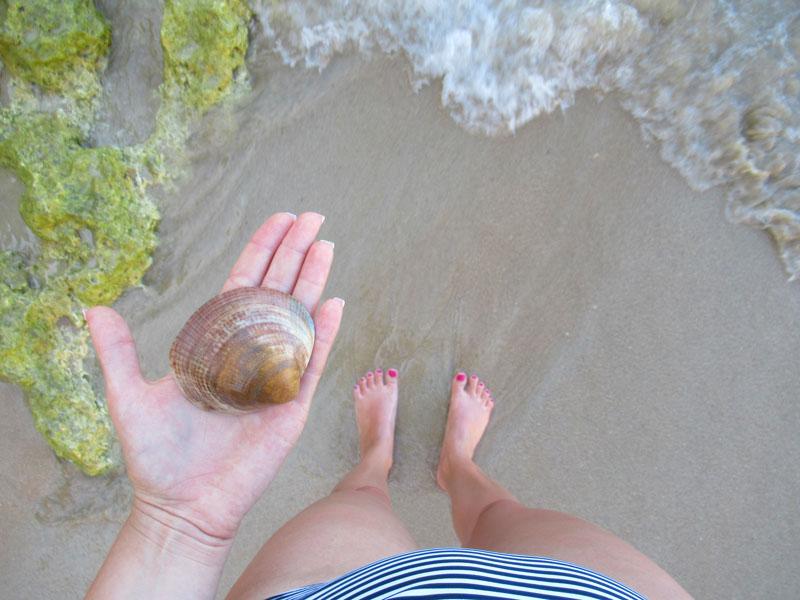 Muszla wyłowiona z oceanu w Portugalii
